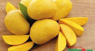 Health benefits of ripe mangoes, পাকা আম খাওয়ার উপকারিতা এবং পাকা আম খাওয়ার অপকারিতা