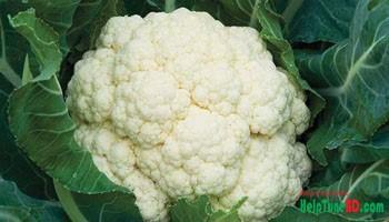 cauliflower can prevent cancer, ফুলকপি ক্যান্সার প্রতিরোধ করতে পারে