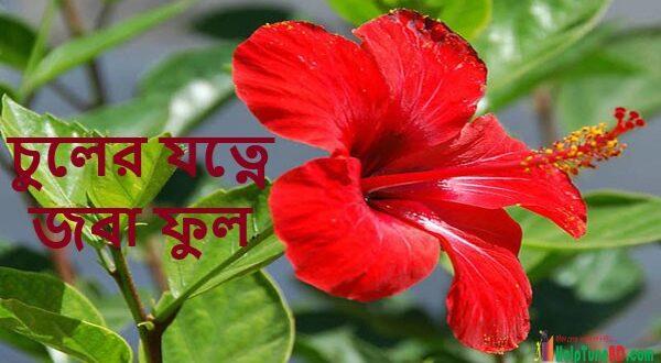 Use of Hibiscus Flowers for Hair Care, চুলের যত্নে জবা ফুল